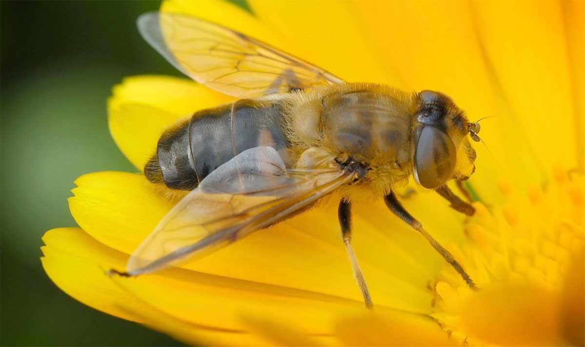 Пчёлы простились с хозяйкой
