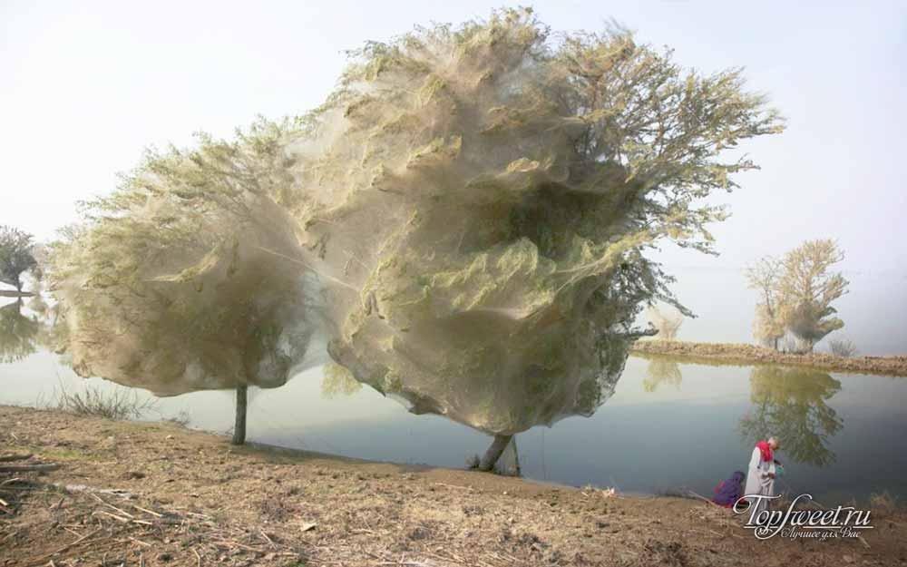 Странные деревья в Пакистане