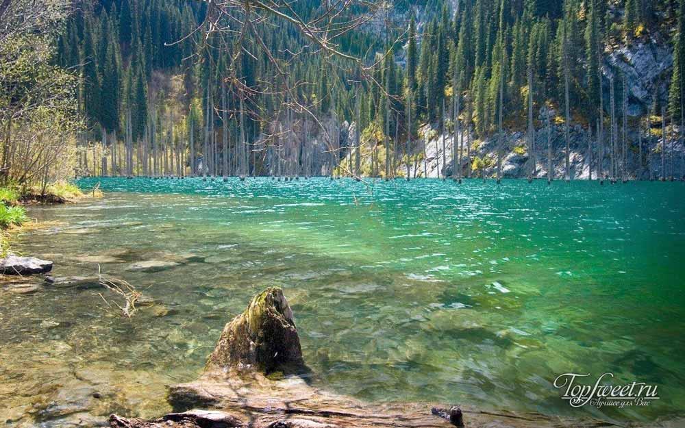 Затонувший лес