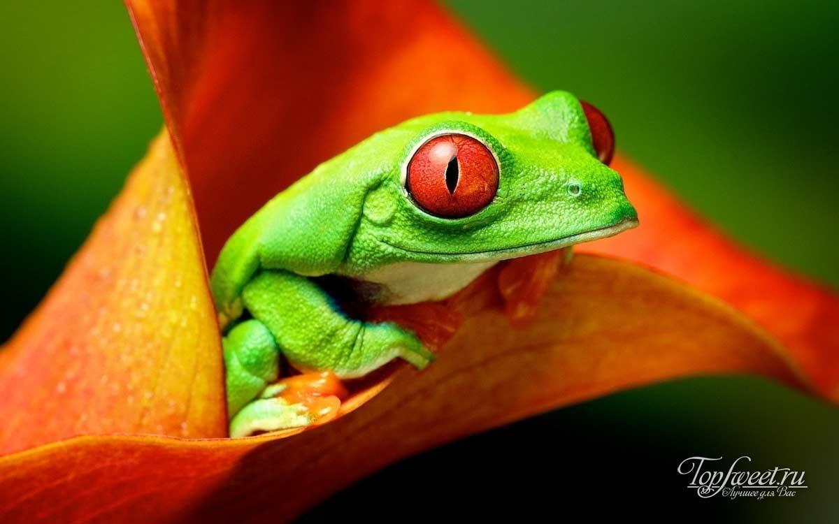 Топ 10 Самых красивых ночных животных в мире