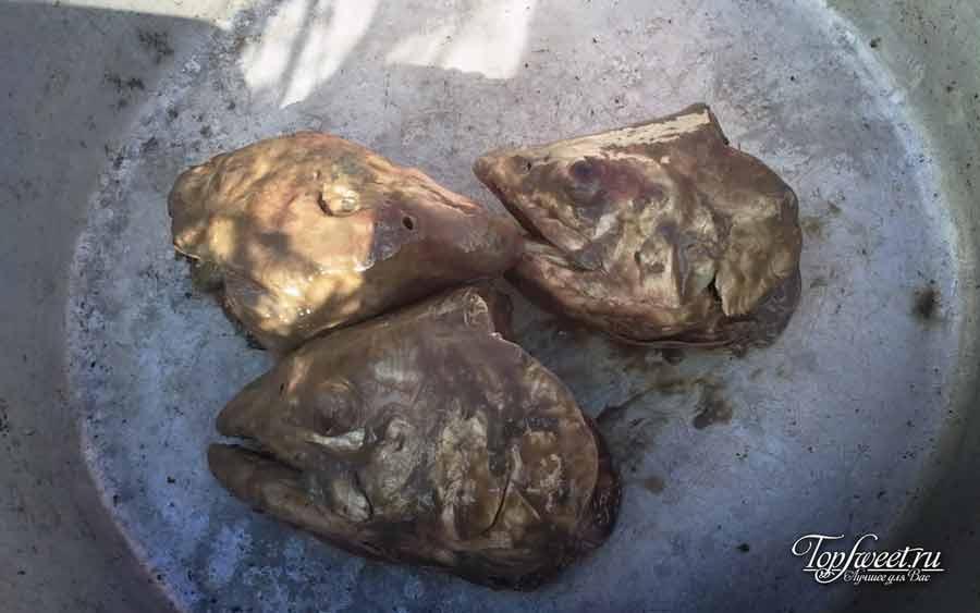 Вонючие головы лосося