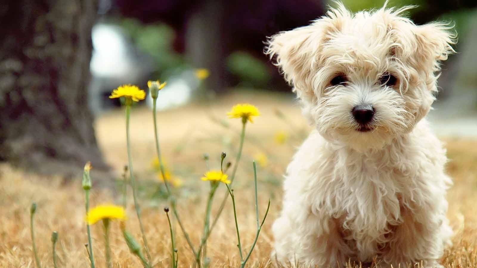 Несколько-интересных-фактов-о-собаках