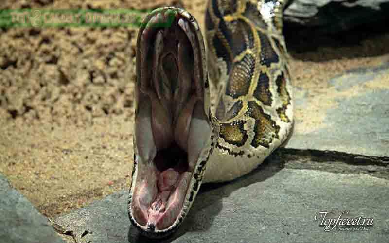внутренности змеи картинки