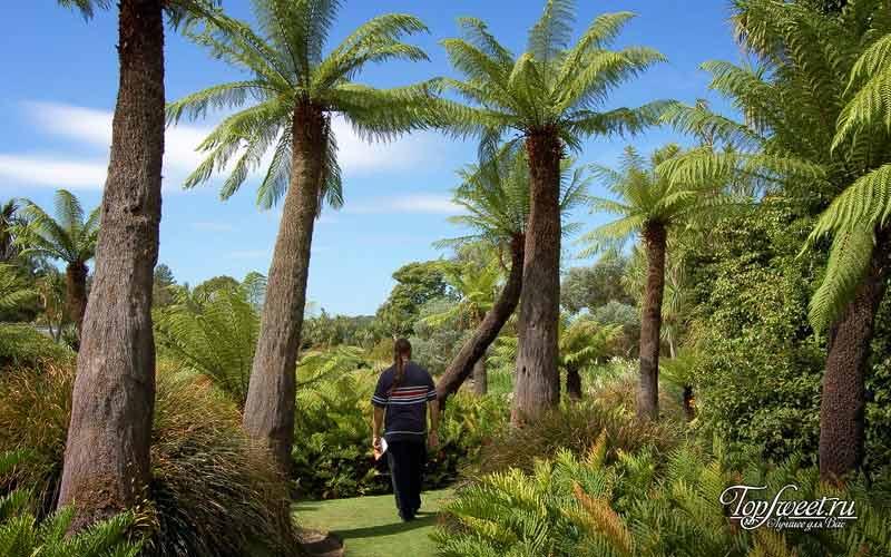 Ботанический сад. 10 Мест в Шотландии
