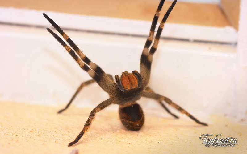 Самые страшные пауки в мире