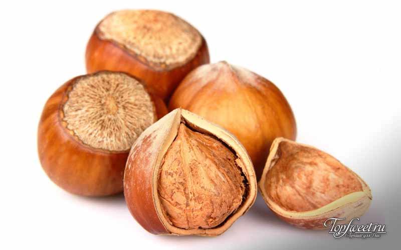 Фундук. Самые полезные и питательные орехи