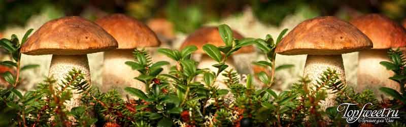 Рыба Фугу. ТОП-10 самых ядовитых продуктов