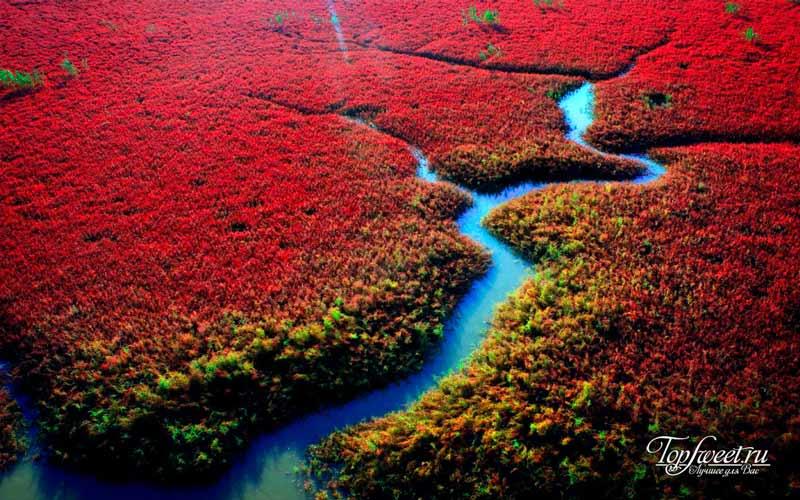 Красный пляж Паньцзинь