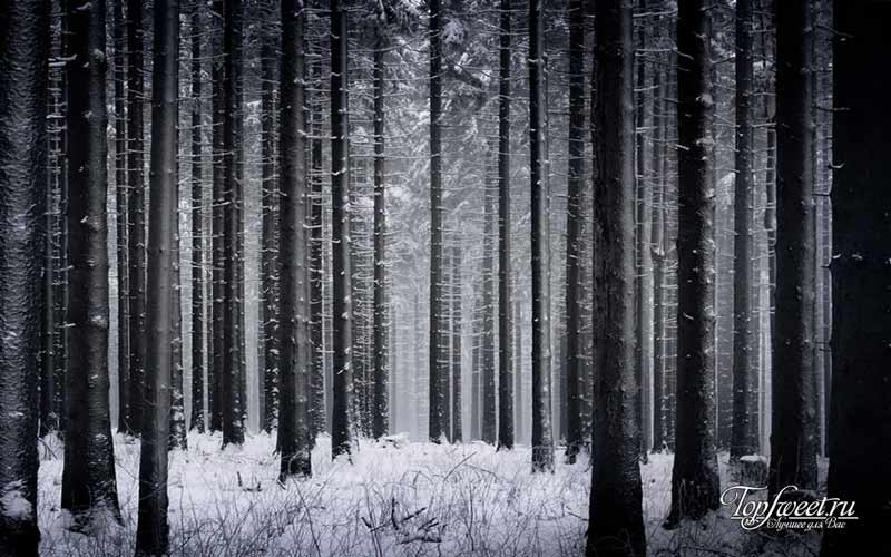 Лес. Волшебные места