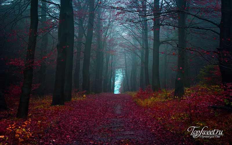 Лес. Загадочные места