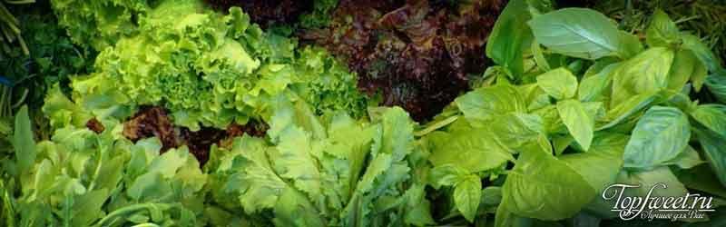 Листовая зелень. Топ-7 лучших продуктов для зрения