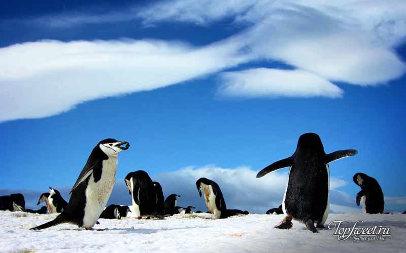 Антарктида. Культовые места для фотосъемки. ТОП-10