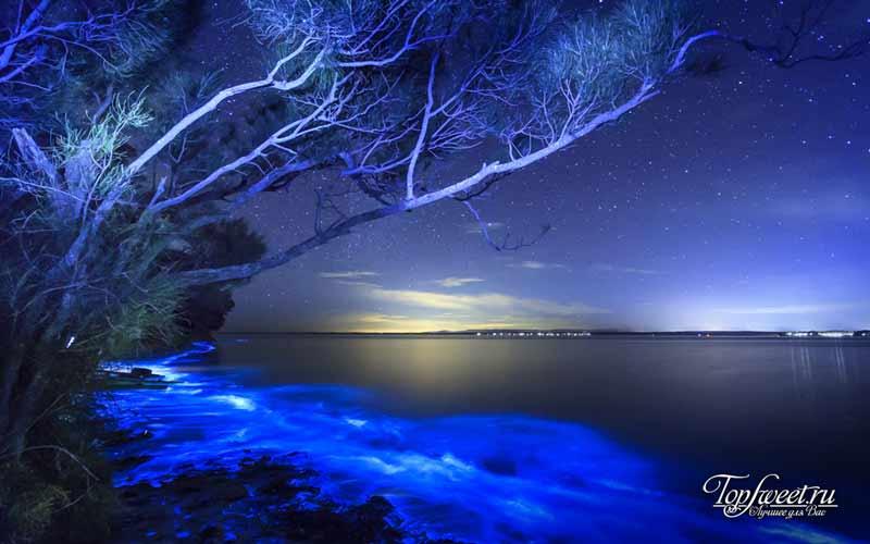Биолюминисцентный пляж. Самые необычные пляжи в мире