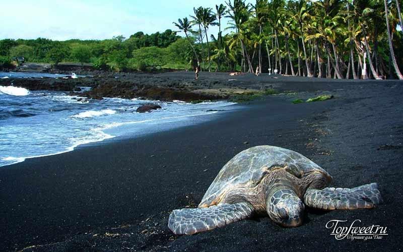 Черный пляж Пуналуу. Самые необычные пляжи в мире