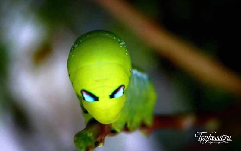 гусеница инопланетянин
