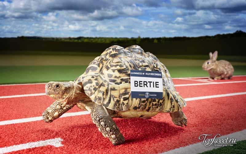 Черепаха. Удивительные рекорды животного мира. ТОП-10