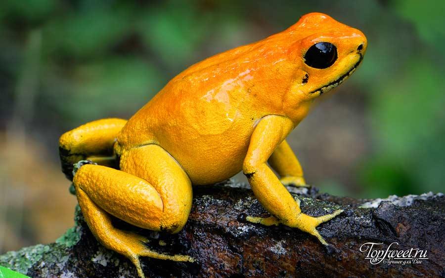Древолаз. ТОП-10 Самые красивые животные в мире