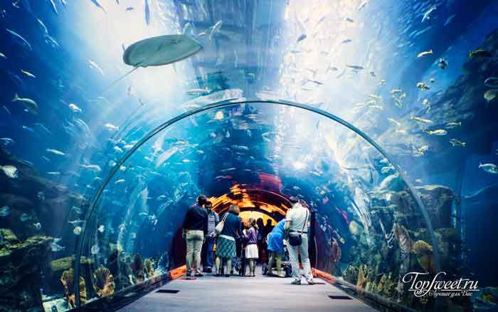 Dubai Mall Aquarium. Самые большие и необычные аквариумы в мире
