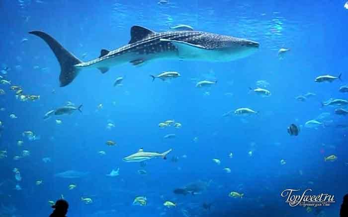Georgia Aquarium. Самые большие и необычные аквариумы в мире