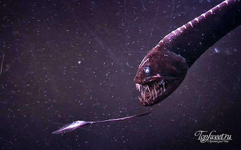 Голомянка-лира. ТОП-10 Самые ужасные морские существа