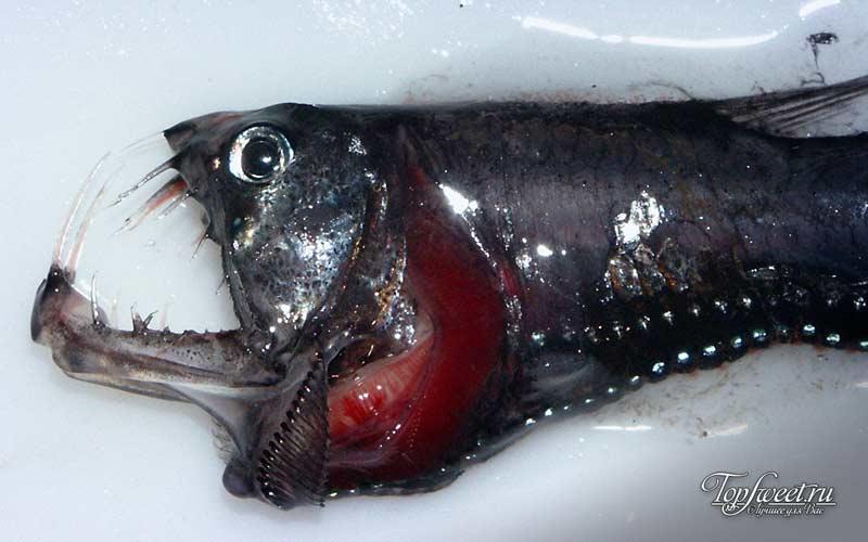 Хаулиоды. ТОП-10 Самые ужасные морские существа