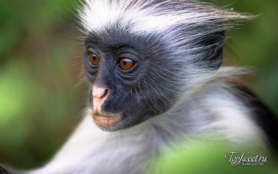 Каракал. ТОП-10 Самые красивые животные в мире