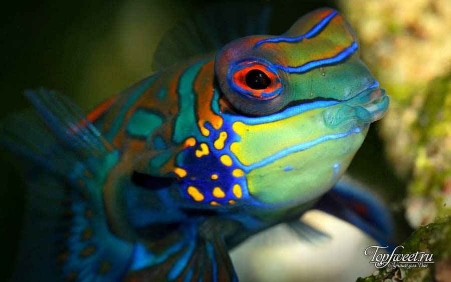 Мандаринка. ТОП-10 Самые красивые животные в мире