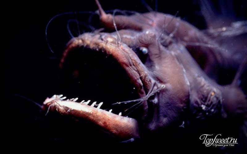 Морской черт. ТОП-10 Самые ужасные морские существа