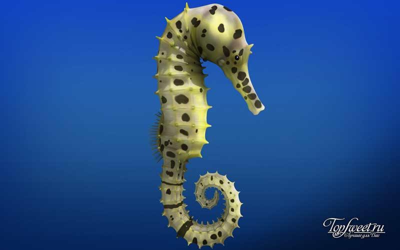 Морской конек. Самые медленные животные мира