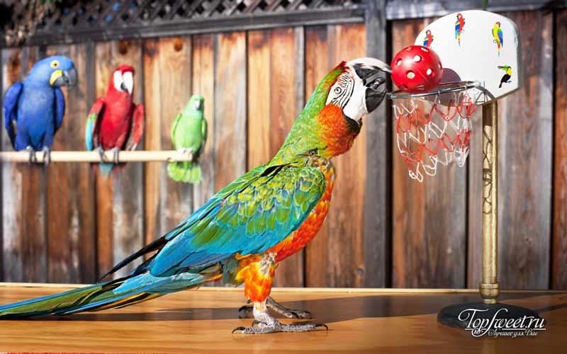 Попугай. Удивительные рекорды животного мира. ТОП-10