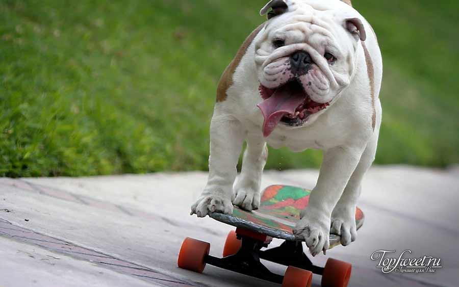 Собака. Удивительные рекорды животного мира. ТОП-10