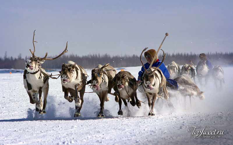 Оленеводы на Ямале. Экстремальный туризм в России