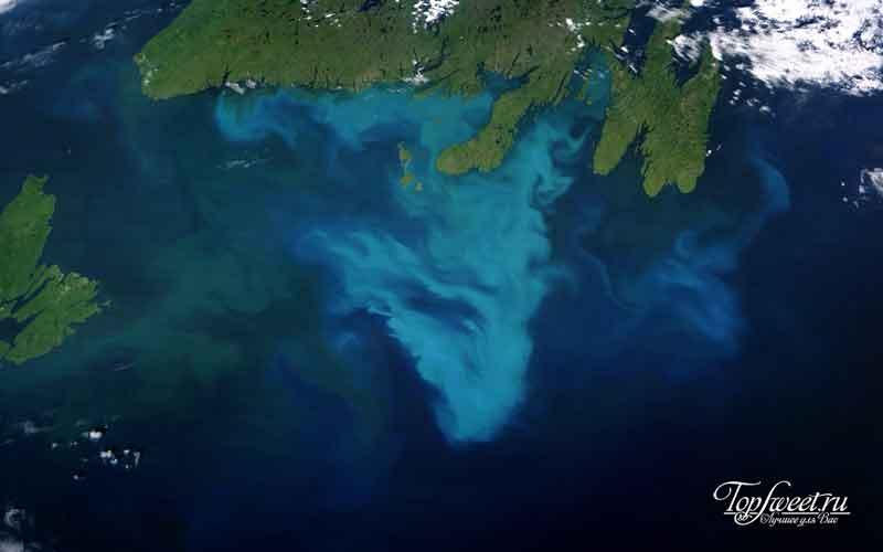 Цветение фитопланктона из космоса