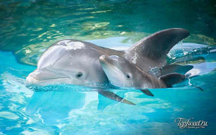 Дельфины. ТОП-10 самых умных животных