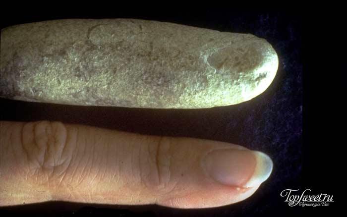 окаменелость пальца