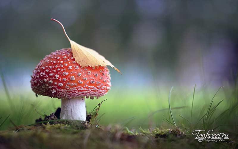 Иисус-гриб