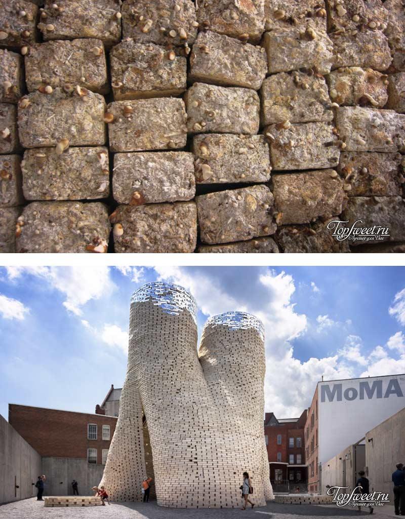 Мицелий. 11 «зеленых» строительных материалов которые намного лучше чем бетон