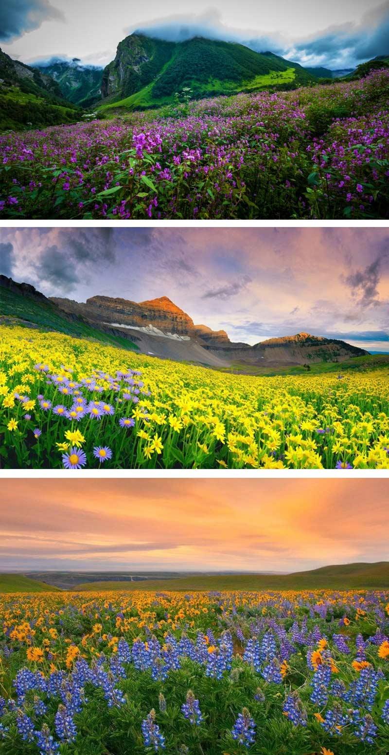 Долина цветов, Уттаракханд, Индия
