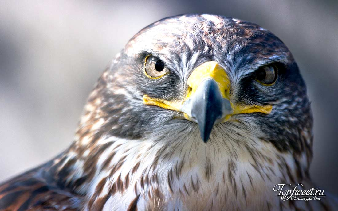 Самые опасные птицы мира