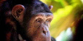 ТОП-10 городов нашествие животных
