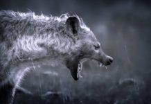 ТОП-10 самых опасных животных
