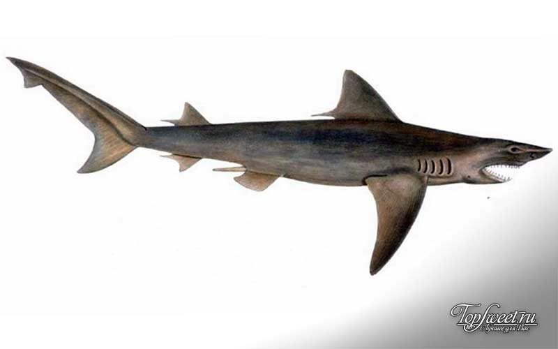 Акула. Интересные факты об Индии