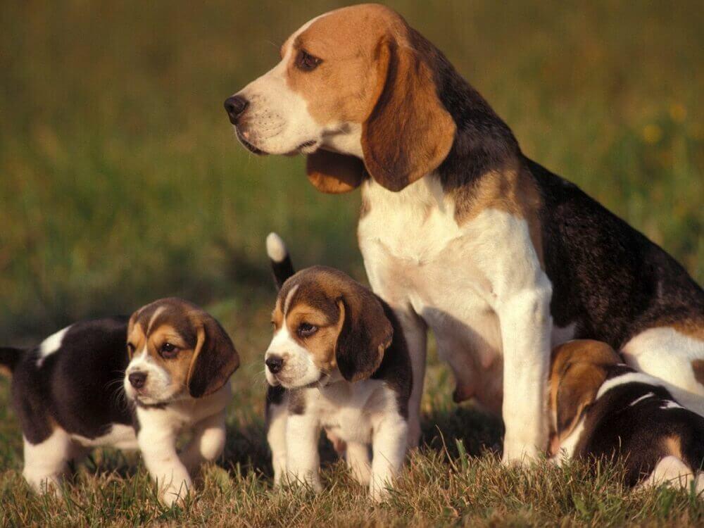 самые лучшие породы собак для детей
